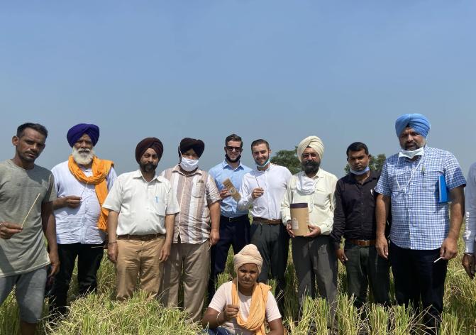 Duurzame rietjes van ECO Wheat-straws